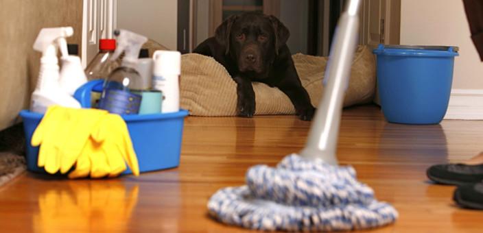 Kakšna čistila uporabljamo?
